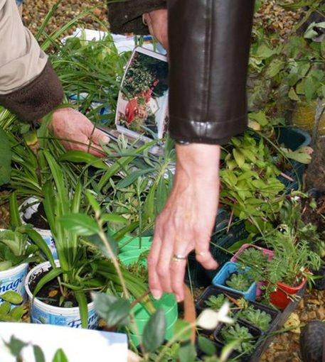 Actu bourse aux plantes intro