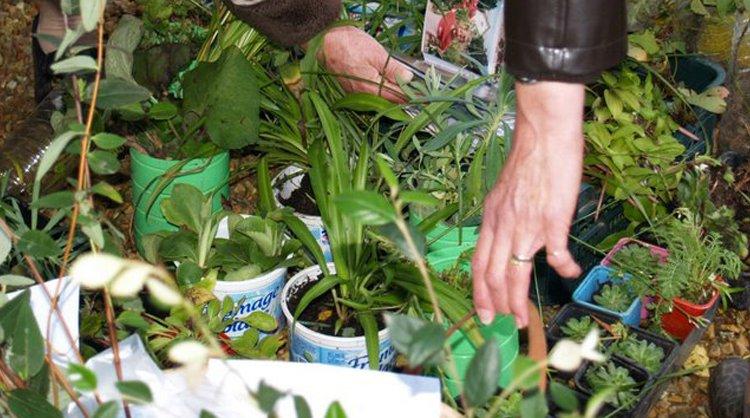 Actu bourse aux plantes